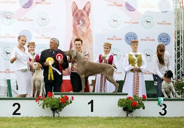 International Dog Shows Moletai 2016